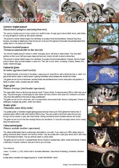 Brochure - Possums & Gliders of the Granite Belt